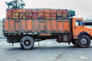 توقیف هزار و ۸۰۰قطعه مرغ فاقد مجوز در شهرستان سربیشه