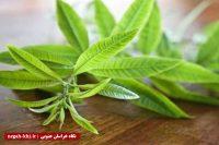 نسخه گیاهی برای تقویت سیستم ایمنی بدن