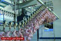 تاثیر نهاده بر قیمت مرغ در خراسان جنوبی