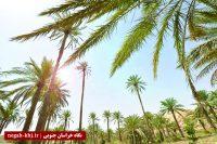 زیرسایه نخلستان ۲۰۰ ساله در بیابان لوت