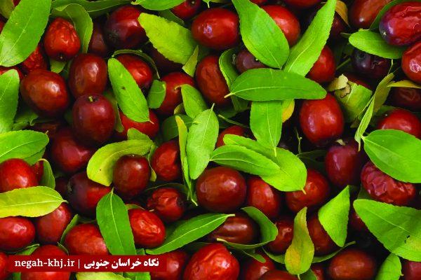 عناب تکانی خوسف ثبت ملی شد